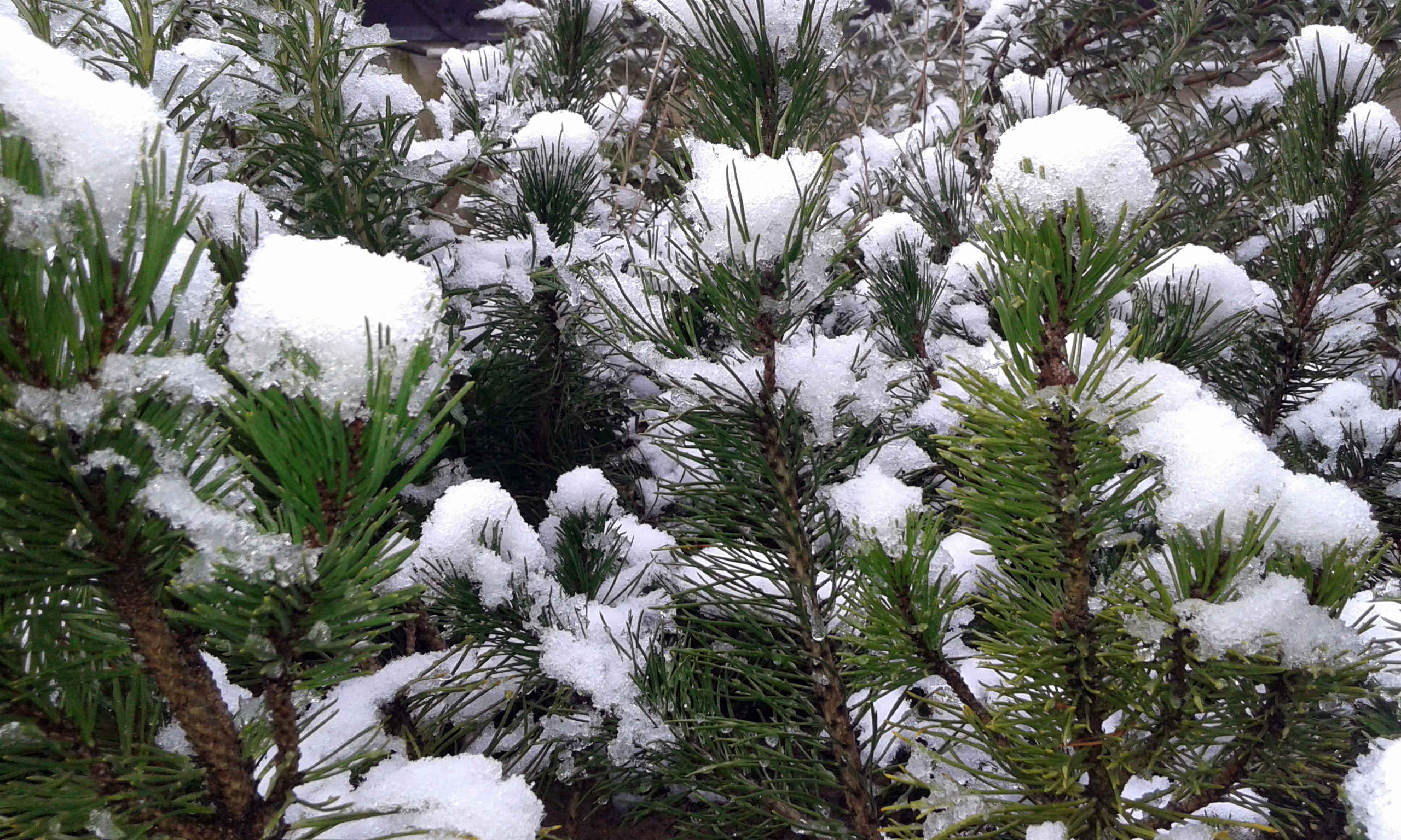Benno und Bob warten auf Schnee