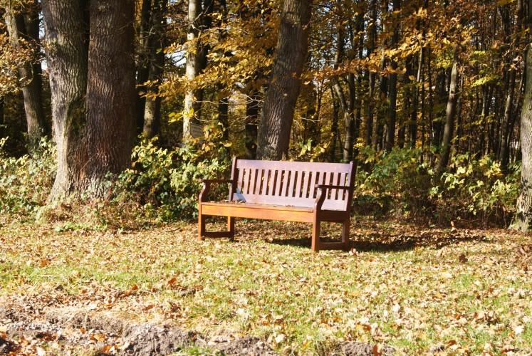 Blogparade 'Eure schönsten' Orte: Daheim im Wald