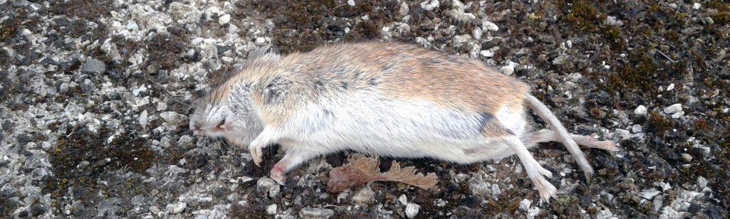 Von Mäusen, denen es nicht gut geht
