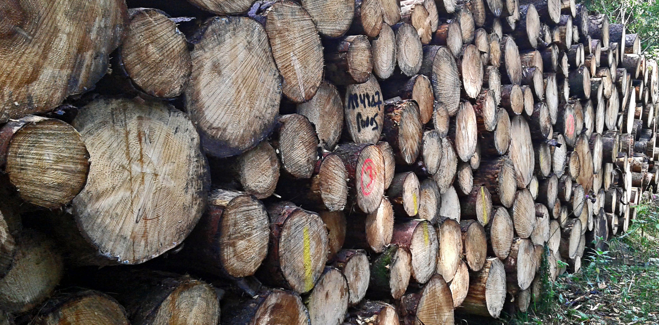 Im Schnauppinger Holz
