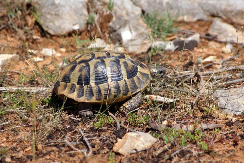 Schildkröte - in Müllnähe