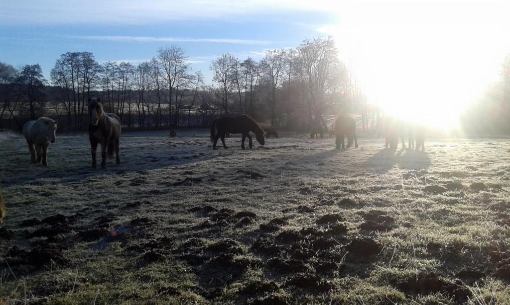 Novemberglück - Pferde im Freien