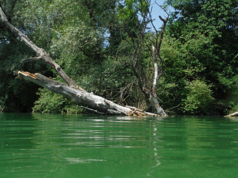 Freiwasserschwimmen u wikipedia