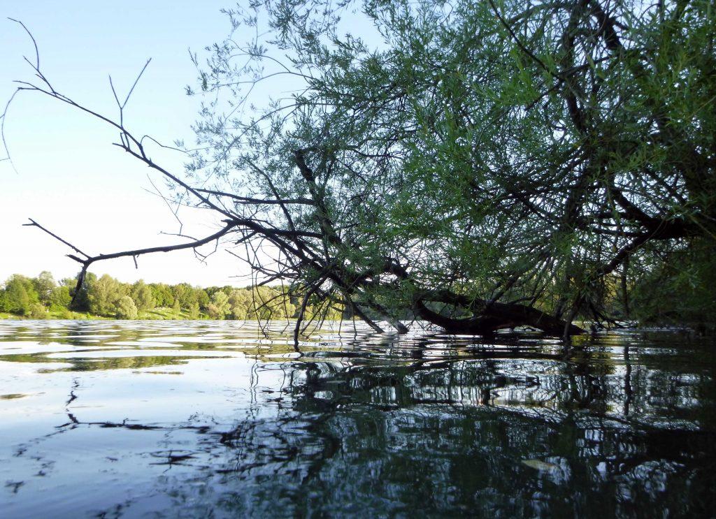 Das Westtufer vom Feldmochinger See