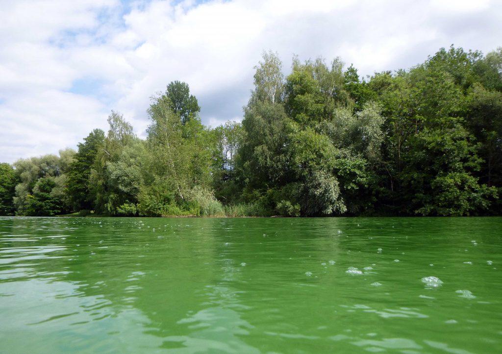 Froschgrünes Wasser im Thenner Weiher