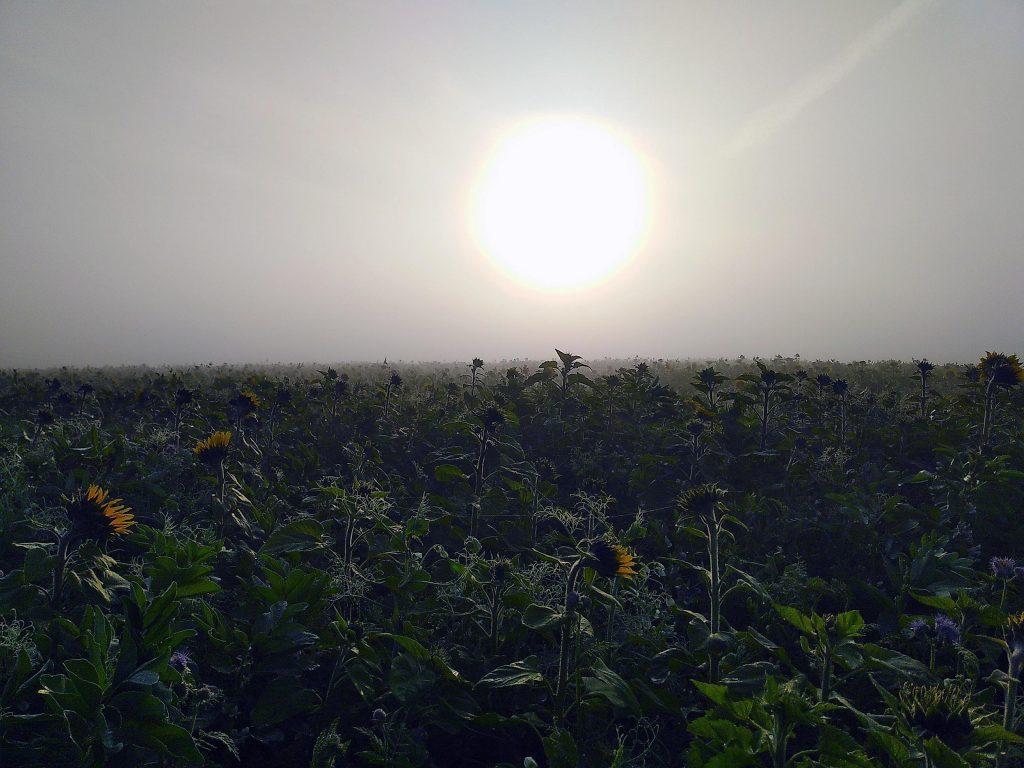 Novemberglück - Die Sonne kämpft sich durch den Nebel
