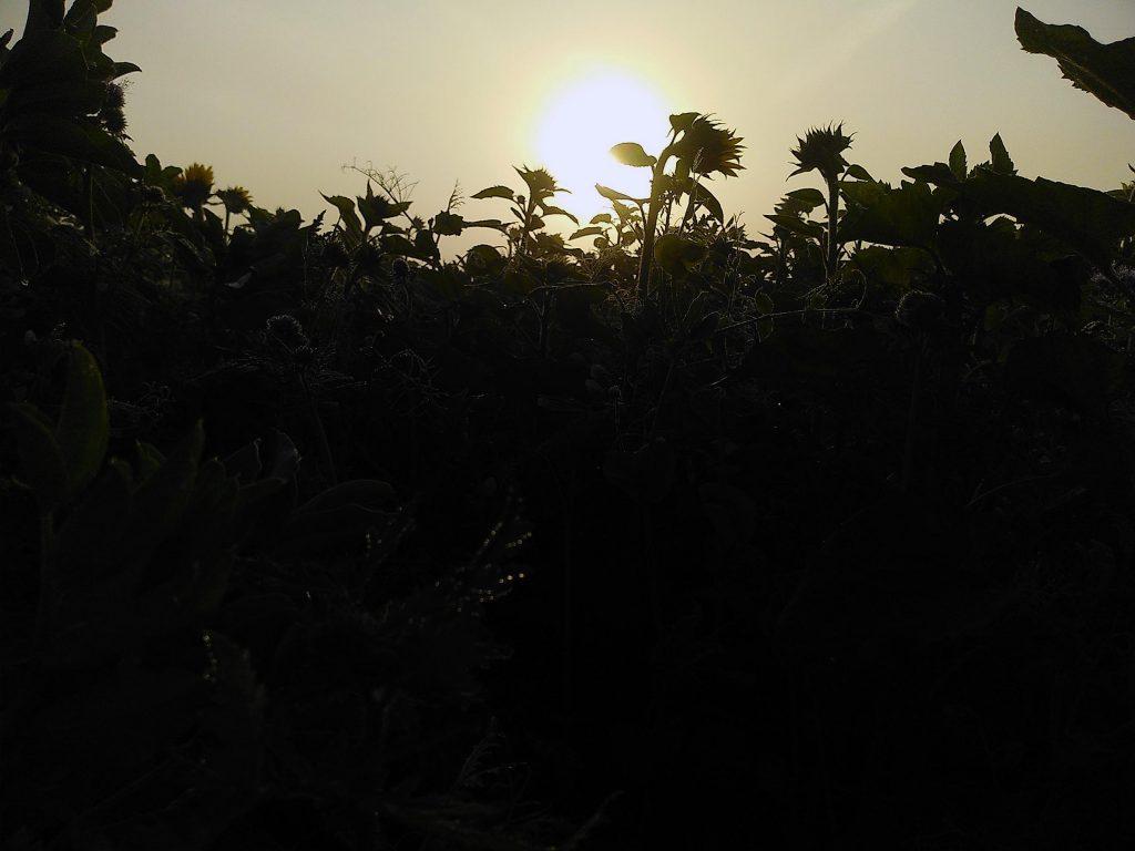 Novemberglück - Die Sonne schafft es