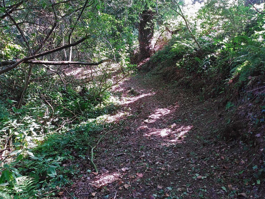 Waldweg am Jaudy