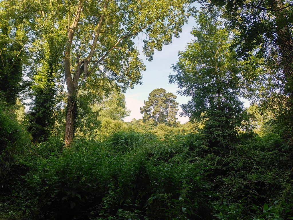 Wald am Jaudy