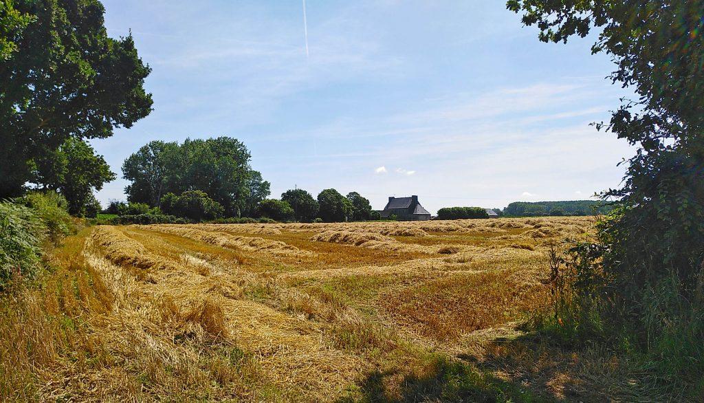 Ein abgeerntetes Feld bei La Roche-Derrien