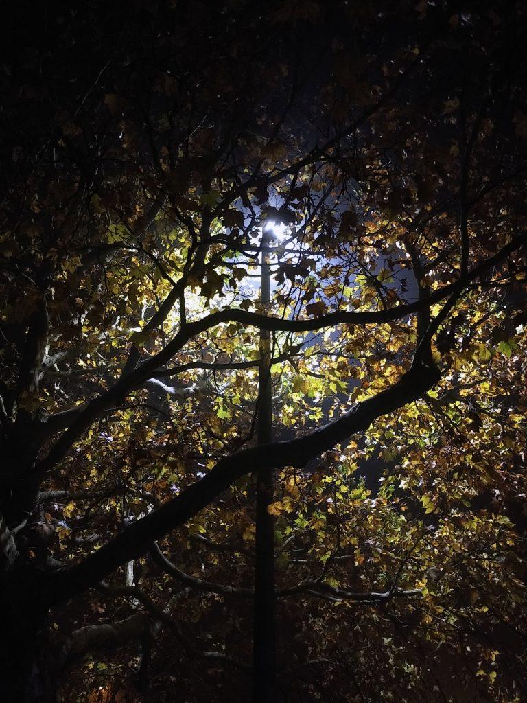 November, Nebel, Nächte - ab nach Hause