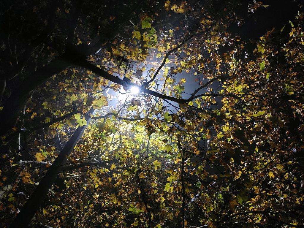 November, Nebel, Nächte - unwirklich, das Licht der Laterne