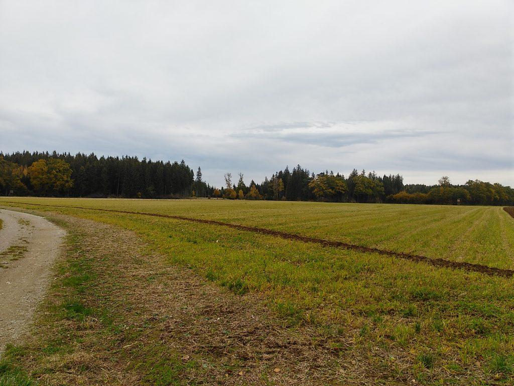 Unterwegs im Parsdorfer Hart - Feld und Wald