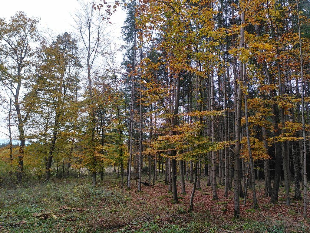 Unterwegs im Parsdorfer Hart - Laubbäume