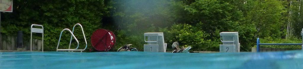 Profis im Schwimmbad - Wasserfögel
