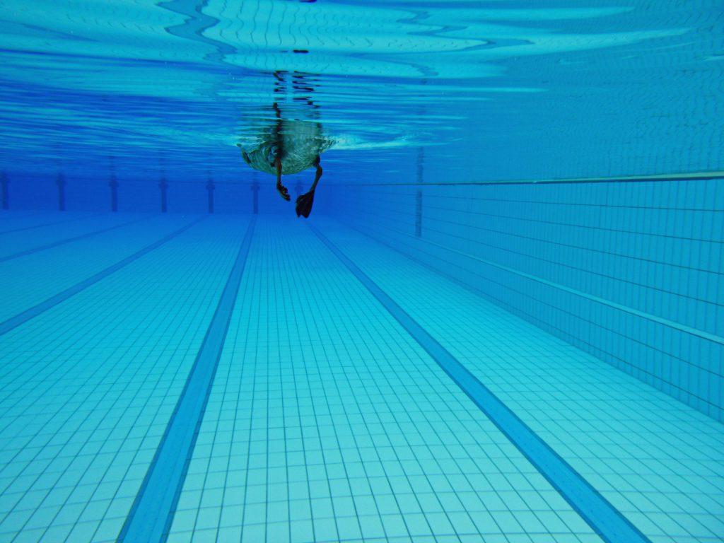 Ente unter Wasser - wie die Profis