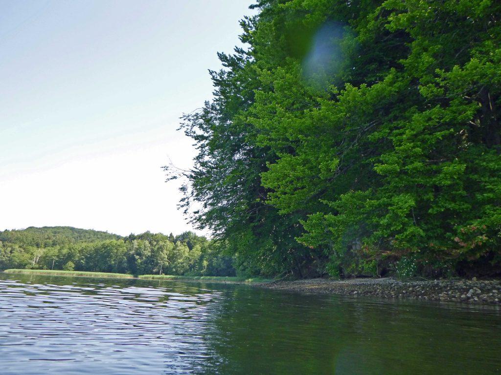 Bewaldetes Ufer