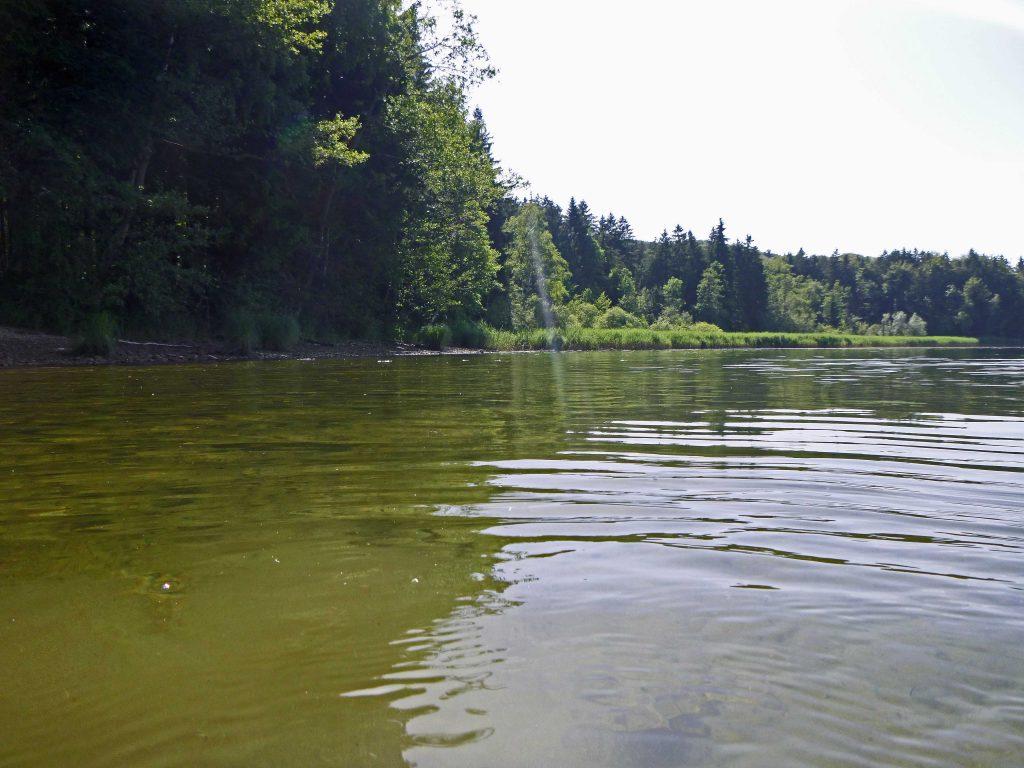 Nah am Ufer wirkt das Wasser gallig grüngelb