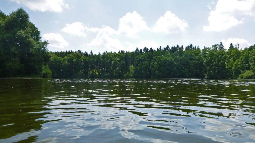 Rinssee - von Wald umgeben