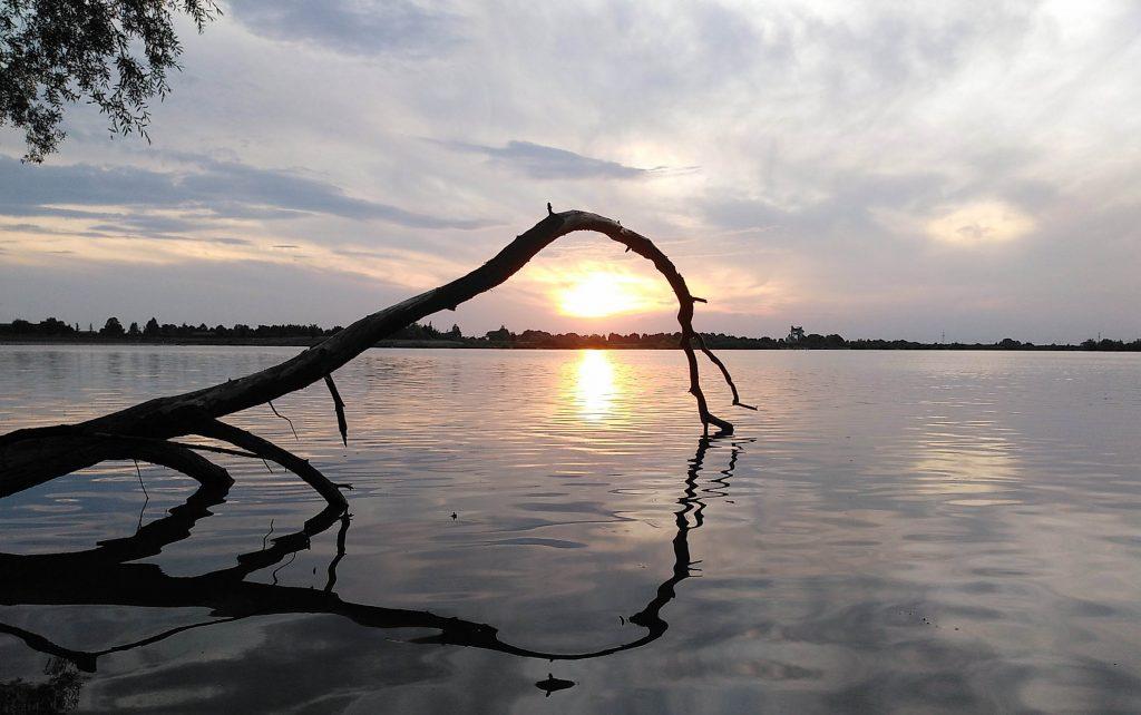 Standardmotiv Totholz vor Sonnenuntergang - Goldene Stunde inklusive