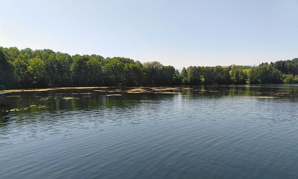 Tinninger See - gut eingewachsen