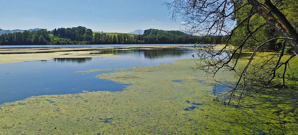 Endlos viele Wasserpflanzen im Uferbereich