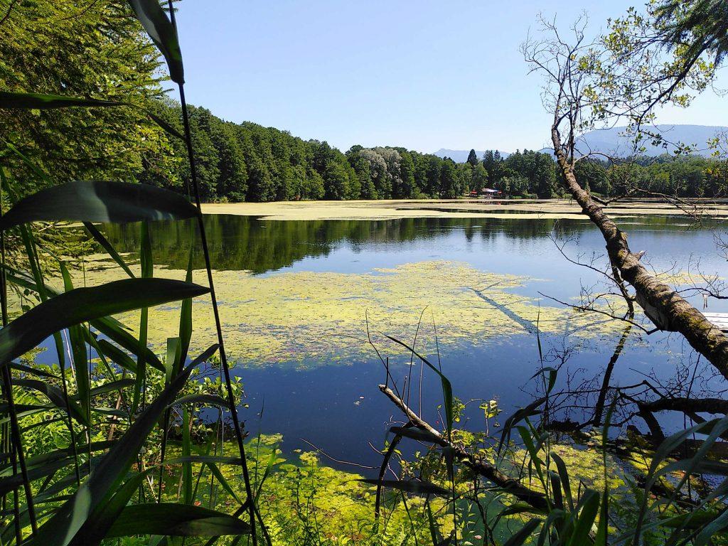 Am Ufer des Tinninger Sees
