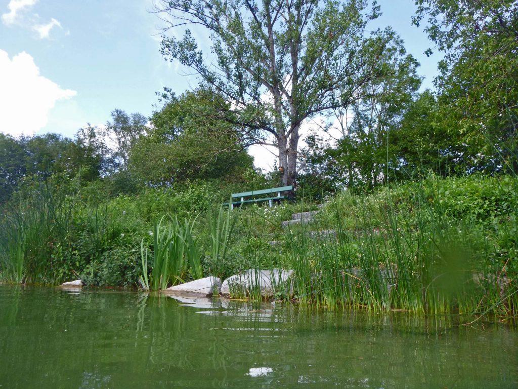 UnterBäumen eine grüne Bank am Nordufer
