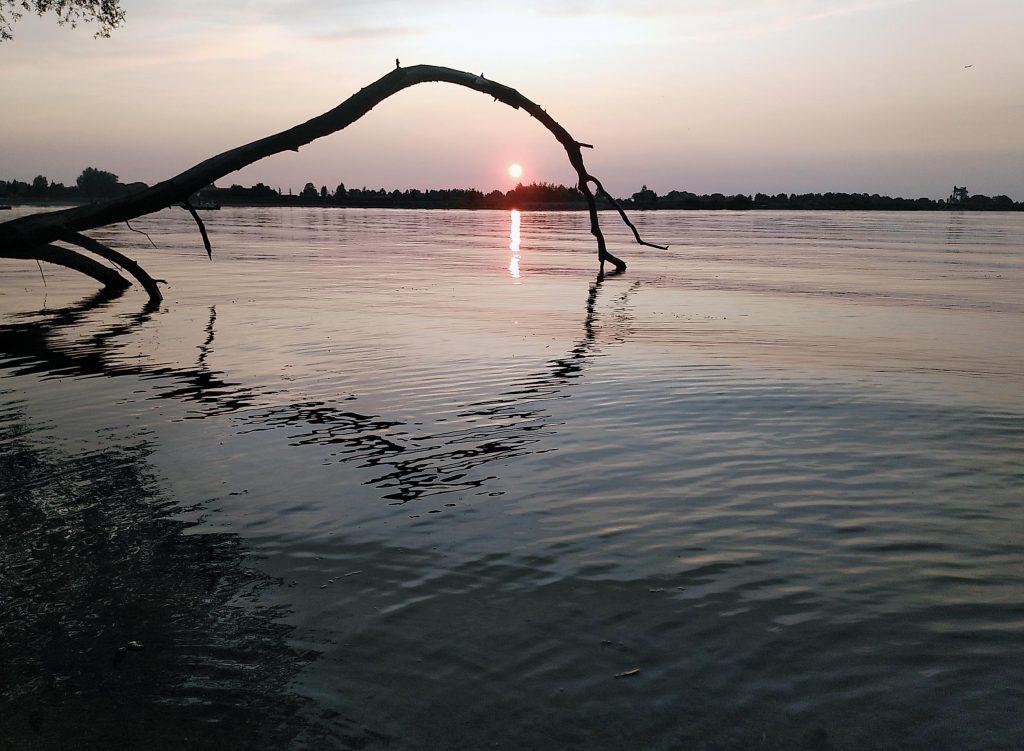 Goldene Stunde - mein Lieblingsbaum