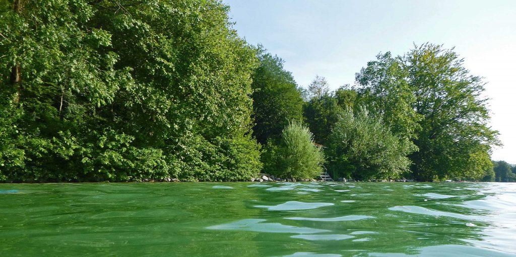 Alles grün am Oststrand, sogar das Wasser