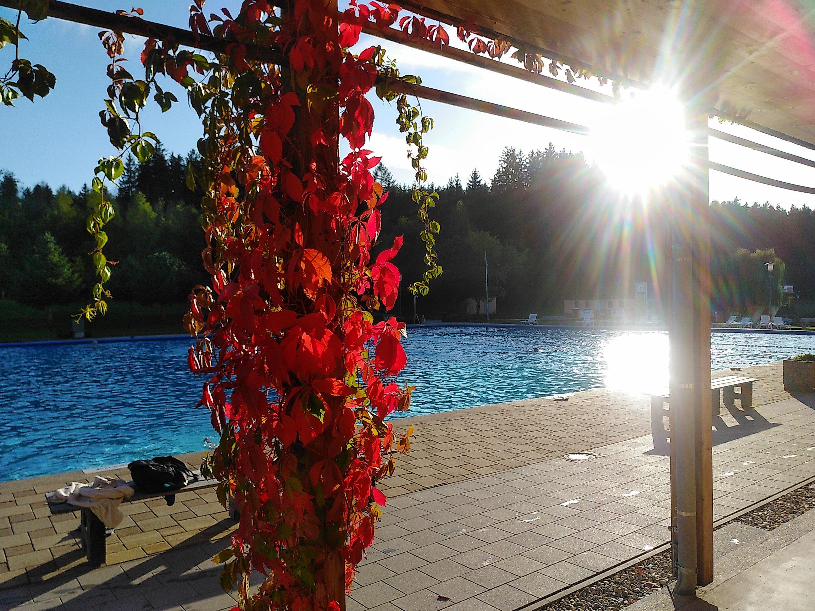 Leuchtend rote Jungfernrebe in Taufkirchen