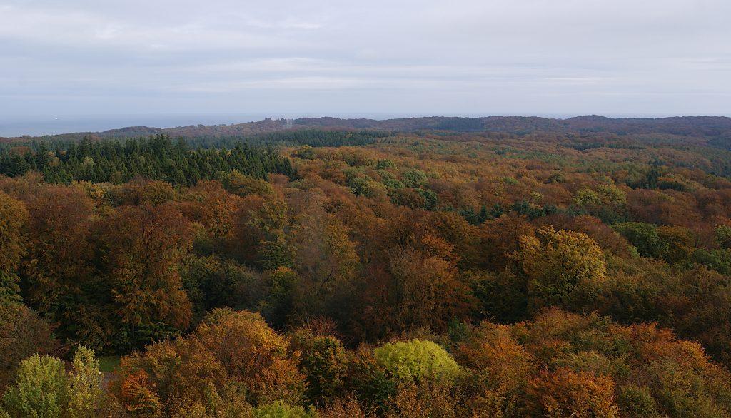 Der Herbstwald der Granitz - vom Turm aus