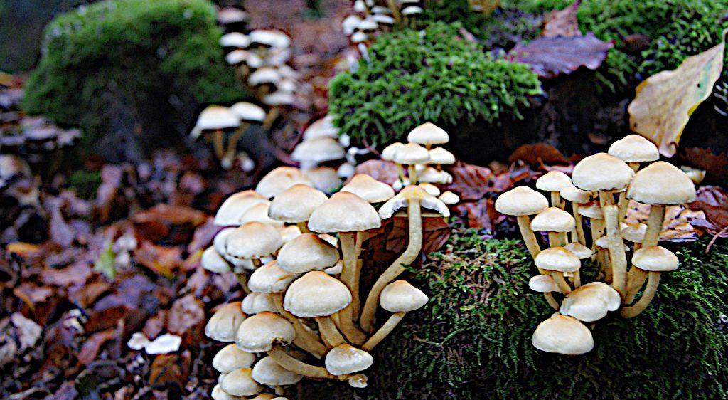 Pilze am Waldboden - Wald
