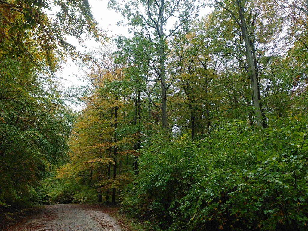 Im Wald auf Rügen