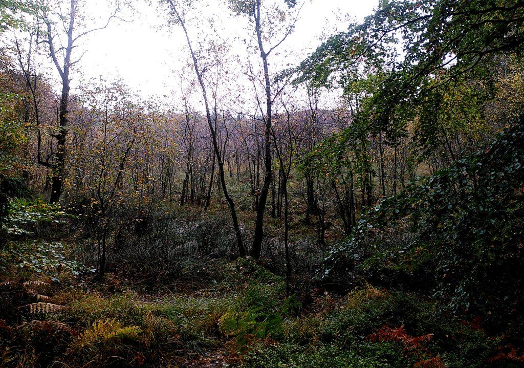 Kesselmoor Große Wiese