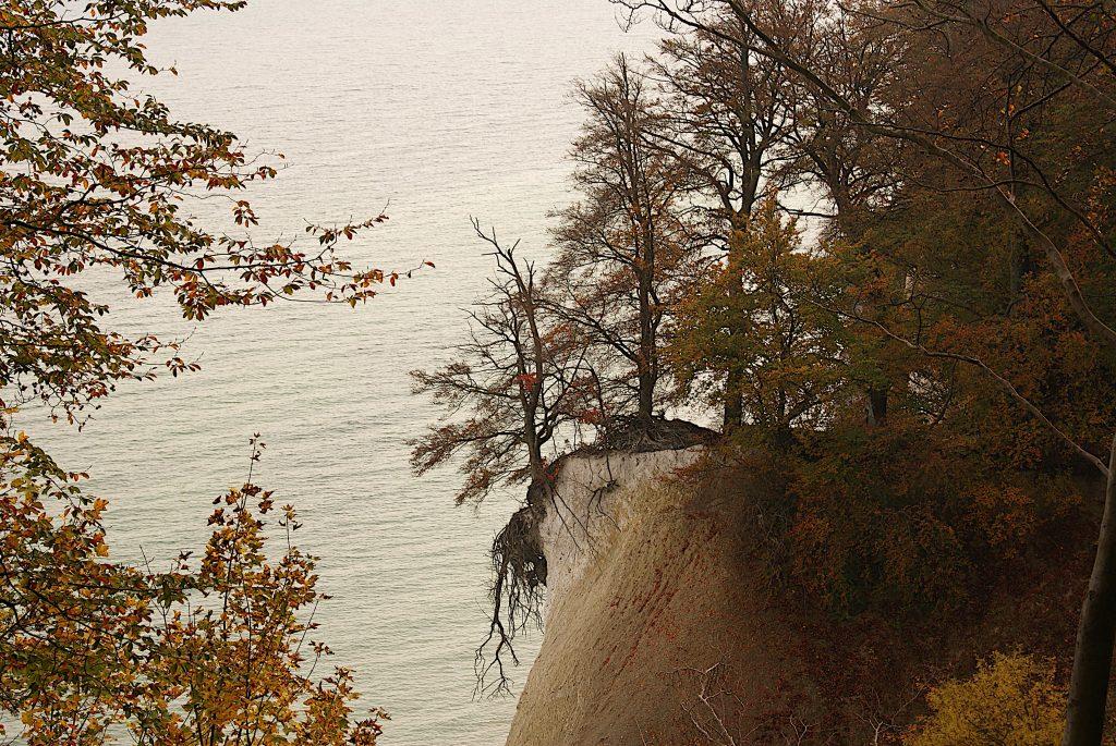 Wenn Bäume bald ins Meer stürzen