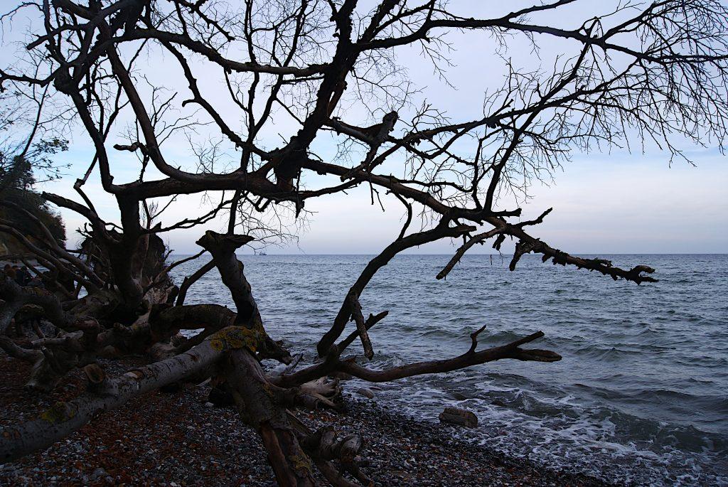 Bäiume am Strand vor Sassnitz