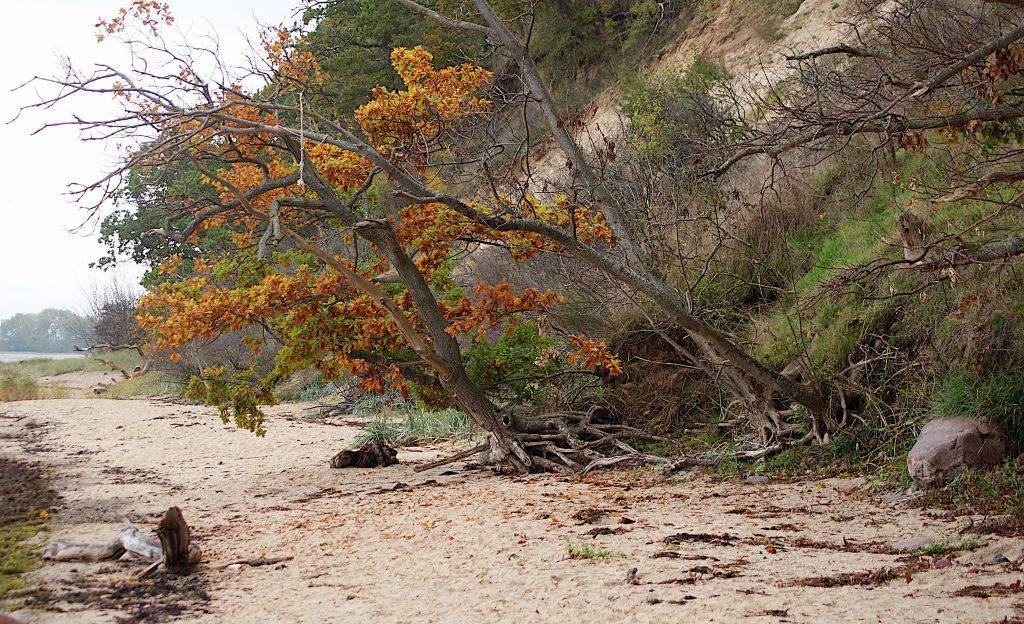 Bäume am Strand