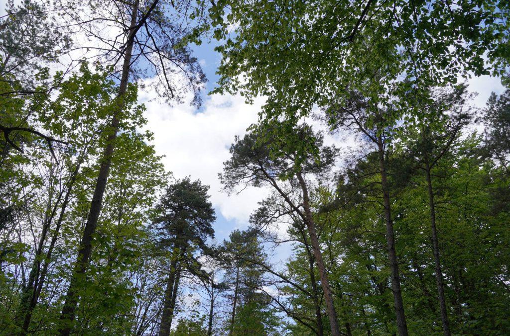 Der Berglwald